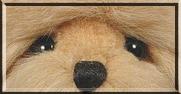 Teddy Bear Eyes